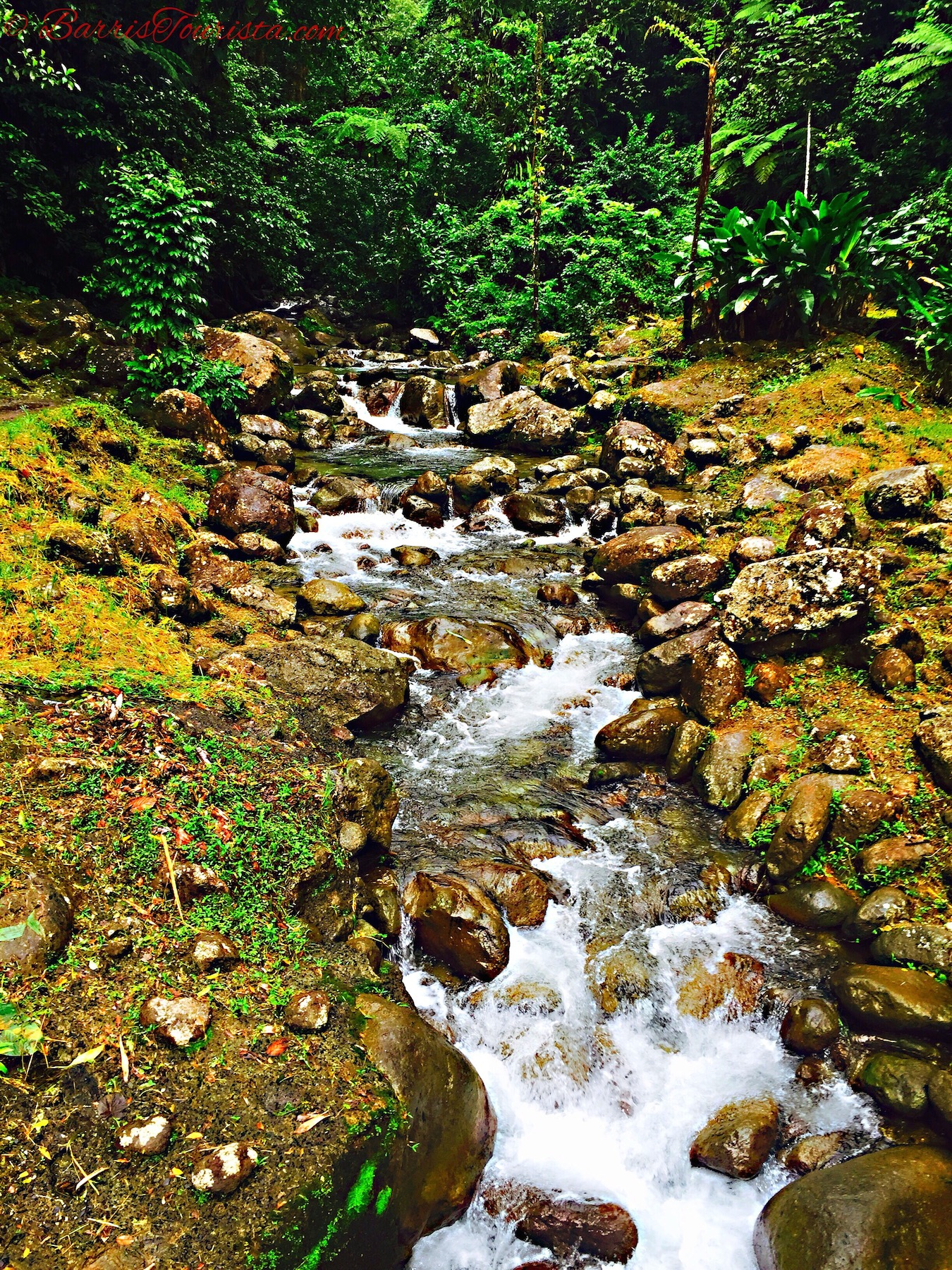 BarrisTourista-Martinique Waterfall karambole tours