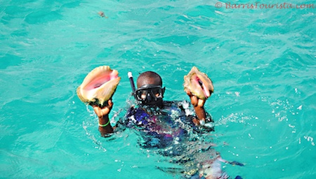 BarrisTourista-Conch Diving caicos dream tours
