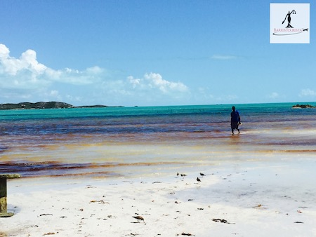 Barristourista-Turks and Caicos Fishing for Conch, food tours Turks and Caicos