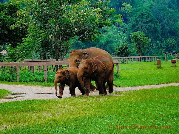 ethical treatment of elephants in asia